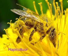 Hapicultuur - hapicultuur.be