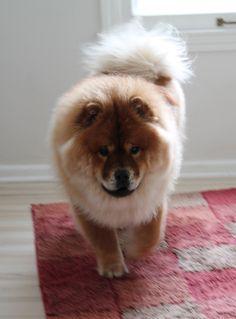 Mochi all fluffy