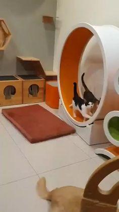 Cat Tree House, Cat House Diy, Hiding Cat Litter Box, Cat Exercise Wheel, Cat Playground, Animal Room, Cat Enclosure, Cat Room, Outdoor Cats