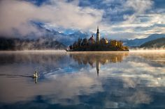 Morning swim by Rok Godec [set against the Church of the Assumption of Mary] - Lake Bled - Slovenia