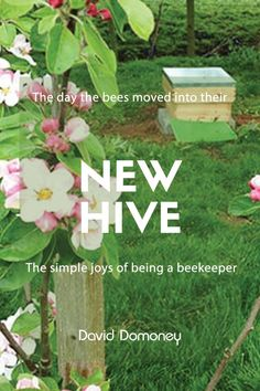 The day the bees moved into their new hive