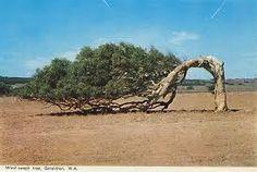 Image result for images of geraldton western australia