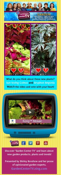 Sun-Loving Coleus and Gryphon Begonia Plants - Garden Center TV  Foliage plant lovers, check these new plants out!    Watch the video and vote for your favorite!    http://www.webdoc.com/documents/C56D6000-1320-0001-869A-198F11A01B4F