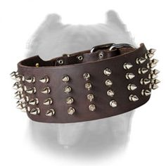 3 inch Wide #Spiked #Dog #Collar for Cane Corso $79.90 | all-about-cane-corso-dog-breed.com