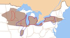 """MAP 23: A vowel shift is occurring right now in the USA's Great Lakes region. Short vowel sounds that survived the Great Vowel Shift [see map 6] and have remained unchanged for hundreds of years are now being altered in major cities and small towns around the Great Lakes.  """"Buses"""" now sounds like """"bosses."""" """"Block"""" comes out like """"black."""" Nobody's sure why, but it may have begun as far back as the 1930s. The map shows which areas have adopted various stages of the vowel shift.  Angr"""