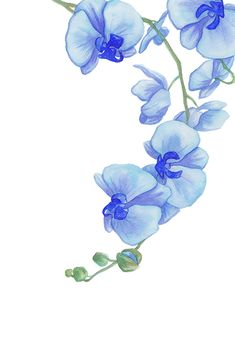 Latest Free of Charge blue Orchids Ideas When you are new to the world of orchids , avoid getting frightened of them. Many orchids can be str Watercolor Cards, Watercolor Flowers, Watercolor Paintings, Blue Orchids, Blue Flowers, Fabric Painting, Painting & Drawing, Orchid Drawing, Orchids Painting
