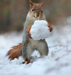 Winter - Playing snowballs - by Vadim Trunov