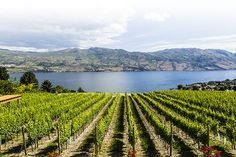 Image result for pictures of kelowna bc canada