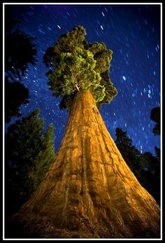 """The General Sherman Tree in Sequoia National Park ~ Sierra Nevada mountains in California from: """"The National Parks: Our American Landscape"""" author/photographer: Ian Shive Sequoia National Park California, California Usa, Sequoia California, Visalia California, California Camping, Humboldt California, California Vacation, General Sherman Tree, Beautiful World"""