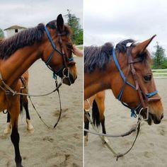 Its hard being baby Ada #horse #horses #horsesofinstagram...