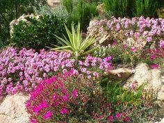 plantas de sol para jardines11                                                                                                                                                                                 Más