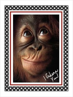 Funny Monkeys Pictures, Monkey Pictures & Photos Funny Monkey Pictures & Pictures of Cartoon Monkeys Funny Cute Cartoon Monkey Pho. Cute Baby Animals, Animals And Pets, Funny Animals, Wild Animals, Monkeys Animals, Exotic Animals, Animals Photos, Happy Animals, Jungle Animals