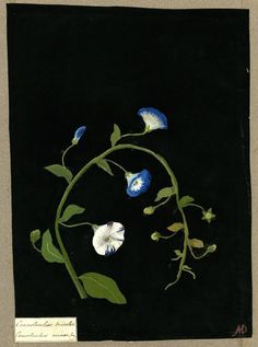Little Green Notebook: Botanicals on Black Paper and Mary Delany