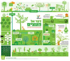 Tu B'Shevat Infographic
