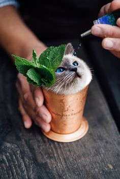 Cup 'O Cat #madewithunsplash