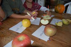 Hold an Autumn Apple Taste Test!