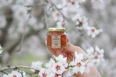 Has your family experienced the flavor and benefits of REAL honey? With so much fake honey in stores, most consumers don't even KNOW they've never had the real stuff! Fake Honey, Buy Honey, Glass Jars, Candle Jars, Creamed Honey, Canned Heat, Agave Nectar, Natural Sugar, Bee Keeping
