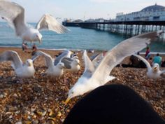 how to spend a day in Brighton Visit Brighton, Brighton Rock, Brighton England, Back In Time, Back In The Day, Stuff To Do, Things To Do, British Summer, Indian Architecture