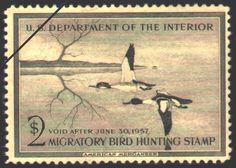 1956 Federal Duck Stamp. Black and white watercolor of American Mergansers (now known as Common Mergansers) by Edward J. Bierly. Edward J. Bierly is also known for his paintings of African wildlife. (Deceased)