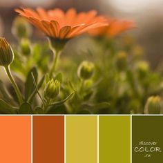 Discover Color - вдохновение цветом   VK