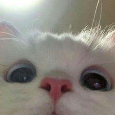 Cute Baby Cats, Cute Kittens, Cute Little Animals, Cute Funny Animals, Cats And Kittens, Funny Cats, Cat Icon, Cute Cat Wallpaper, Cat Aesthetic