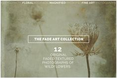 The FADE ART Collection By iseeyouflower