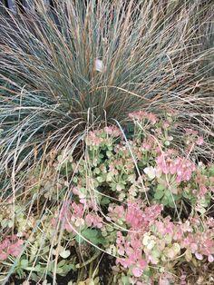 Dandelion, Garden, Flowers, Artist, Plants, Garten, Dandelions, Lawn And Garden, Artists
