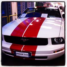 Red and white mustang