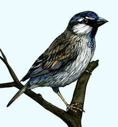 Small bird drawing. Pen and ink, watercolour.