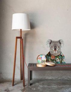 Zoo Portraits: Koala