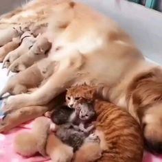 Shop for dogs, cats, fish, small animals and Cute Little Animals, Cute Funny Animals, Funny Dogs, Cute Cats, Cute Animal Videos, Cute Animal Pictures, Beautiful Cats, Animals Beautiful, Tier Fotos