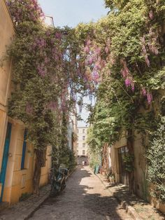 When & Where to Find the Best Wisteria in Paris