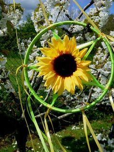 Litha Garden Sunflower Pentacle. Summer Solstice Rays of Awen