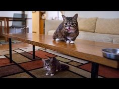 ▶ There are actually TWO BUBS. - YouTube. Bub and Bozz