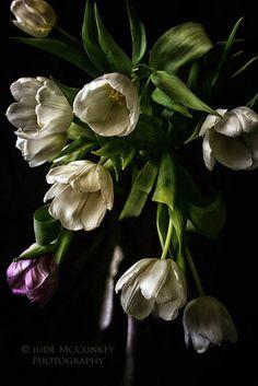 tulipsstill life photography spring 16x24 by judeMcConkeyPhotos, $90.00