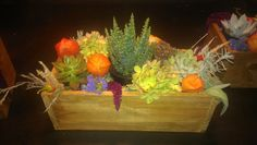 dried flowers and succulents, new leaf organics