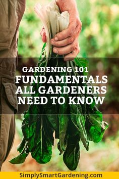 Learn how to become a great gardener! My Gardening 101 series covers the must-kn. Learn how to bec