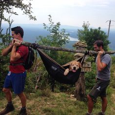 This dog's hips gave out while hiking! Luckily, his owner had an ENO hammock ready to improvise as a sling. Looks like everyone's happy now. Kenneth Rowland-Short Off mnt, NC