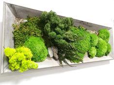 Moss Wall Art, Moss Art, Garden Frame, Garden Art, Plant Art, Plant Decor, Green Plants, Air Plants, Deco Spa