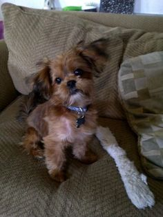 A little girl and her puppy have been reunited after Meeko, her 6-month-old Yorkie-Shih tzu mix was stolen. Michael Mabanag, the father of 10-year-old Marissa Mabanag, came home 2 days ago to discover that the family home in San Jose, California had been burglarized.