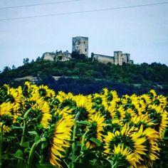 #Latergram / #Chateau de #Puivert dans les #tournesols  #aude #jaimelaude #audetourisme #tourismeoccitanie #suddefrance #sud #igersaude #castle #passionchateau #instacastle #instachateau