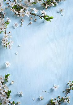 Cyan-blauer Blumen-Hintergrund – pngtree – Join the world of pin Flower Background Wallpaper, Flower Backgrounds, Nature Wallpaper, Wallpaper Backgrounds, Iphone Wallpaper, Cool Background Images, Spring Backgrounds, Colorful Backgrounds, Frame Background