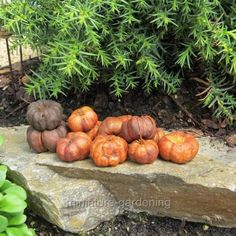 Wholesale Country Primitive Gifts / KP Home Collection Putka Pumpkins, 25 Pieces for Miniature Garden, Fairy Garden
