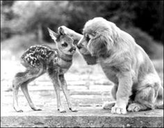 "One of the cutest pictures ever! Puppy and baby deer. The puppy is all like ""Will you be my friend?"" Makes my heart go squee!"