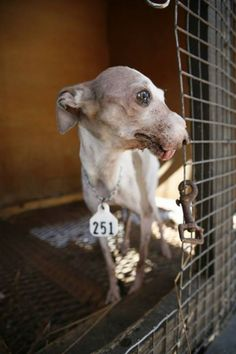 "Petition | ""A.UNITE.A.A."" ( A United Nation Intended To End Animal Abuse ) 