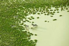 Botswana Bath by Zack Seckler #Photography Zebras #Zach _Seckler