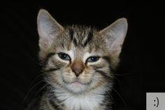 これはニヤニヤしちゃうわ…23の顔文字を猫で表現した写真まとめ | DDN JAPAN