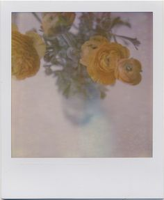 ❀ all you need is room to bloom Vintage Photography, Film Photography, Polaroid Pictures Photography, Street Photography, White Photography, Landscape Photography, Nature Photography, Fashion Photography, Wedding Photography