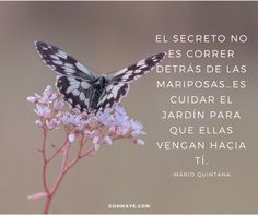 ♥️#frases #citas #vivir #quotes #life #butterfly #inspiration #motivation #followme/ From www.facebook.com/gonmaye