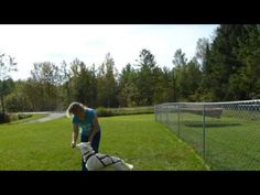 Putting A Harness On A Sled Dog and Teaching the Line Out Command - YouTube